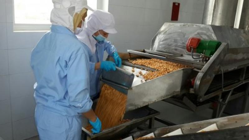 Roasted Cashew processing